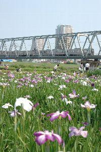 国府台〜江戸川